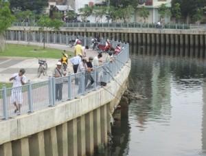 Nhiều người vẫn buông câu trên kênh Nhiêu Lộc - Thị Nghè để tận diệt đàn cá đang hồi sinh